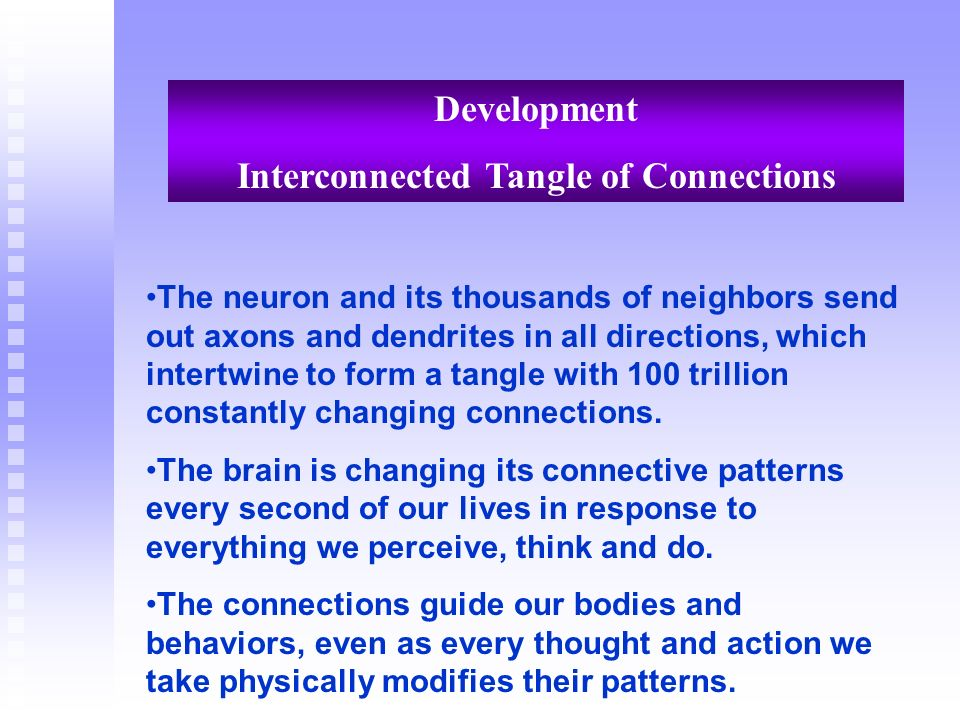 Development Interconnected Tangle of Connections The neuron and its thousands of neighbors send out axons and dendrites in all directions, which inter