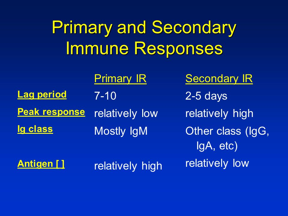 Primary and Secondary Immune Responses Primary IR 7-10 relatively low Mostly IgM relatively high Secondary IR 2-5 days relatively high Other class (Ig