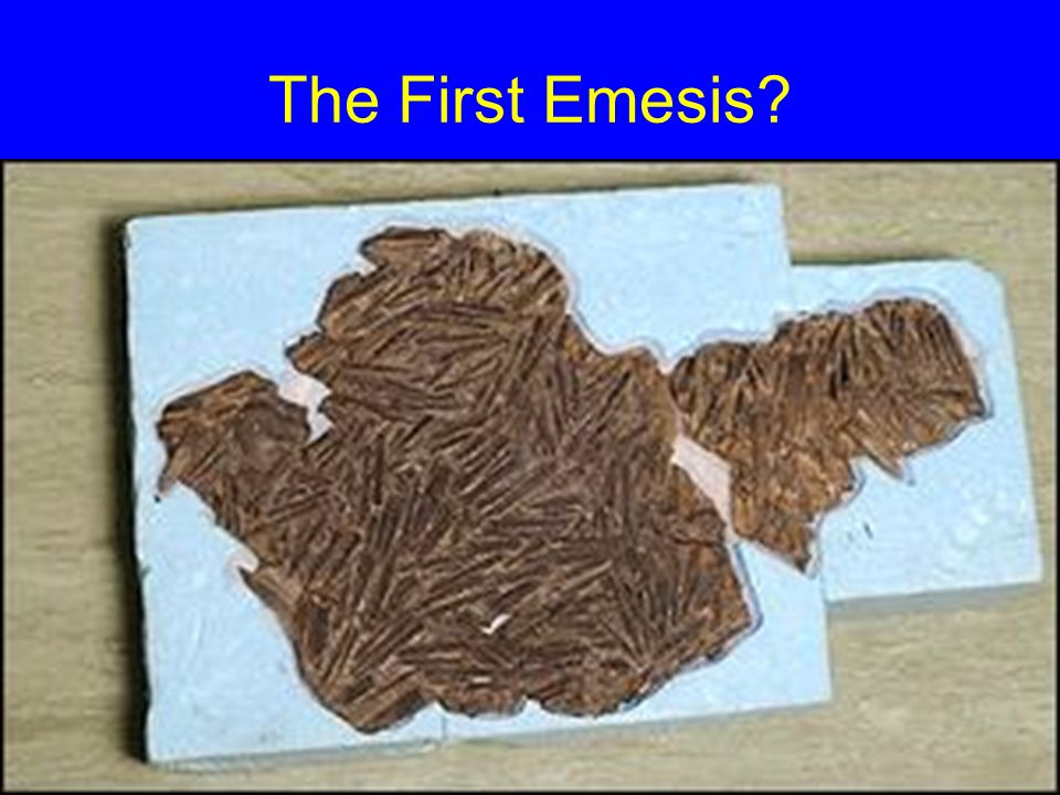 The First Emesis?