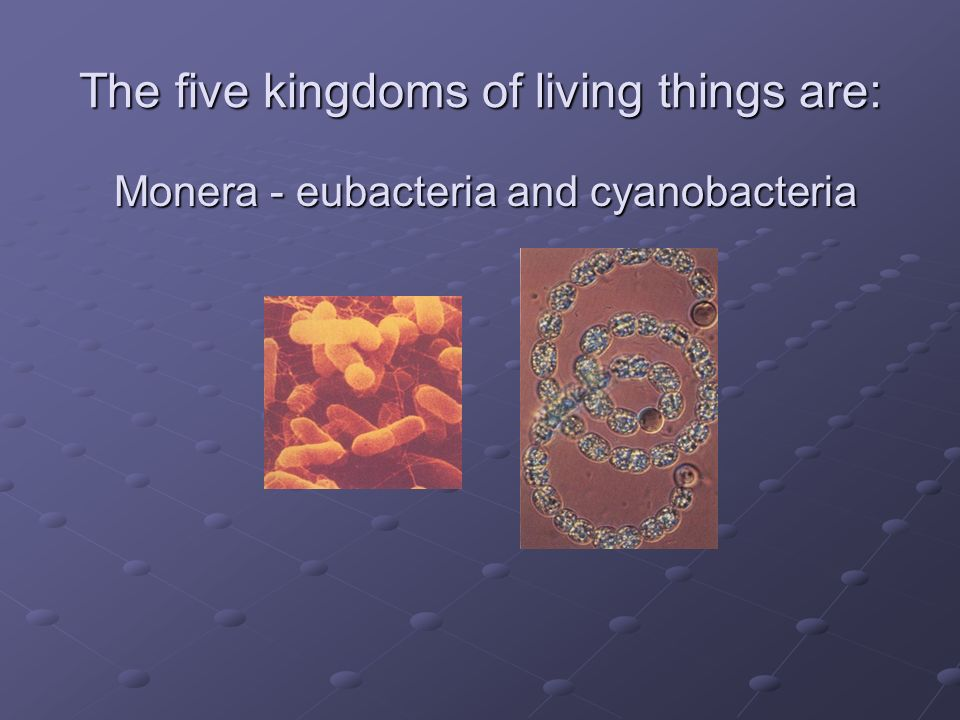 The five kingdoms of living things are: Monera - eubacteria and cyanobacteria