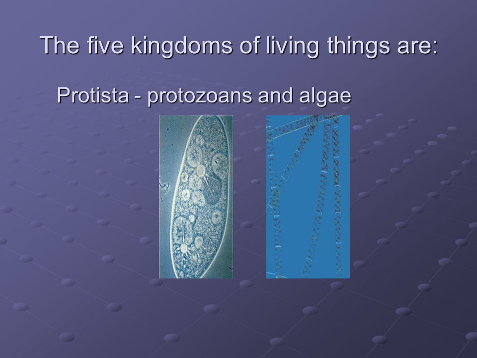 The five kingdoms of living things are: Protista - protozoans and algae