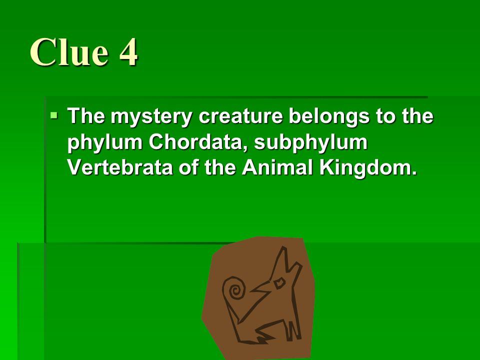 Clue 4 The mystery creature belongs to the phylum Chordata, subphylum Vertebrata of the Animal Kingdom. The mystery creature belongs to the phylum Cho