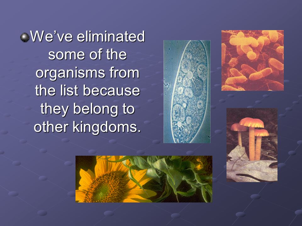 Weve eliminated some of the organisms from the list because they belong to other kingdoms.
