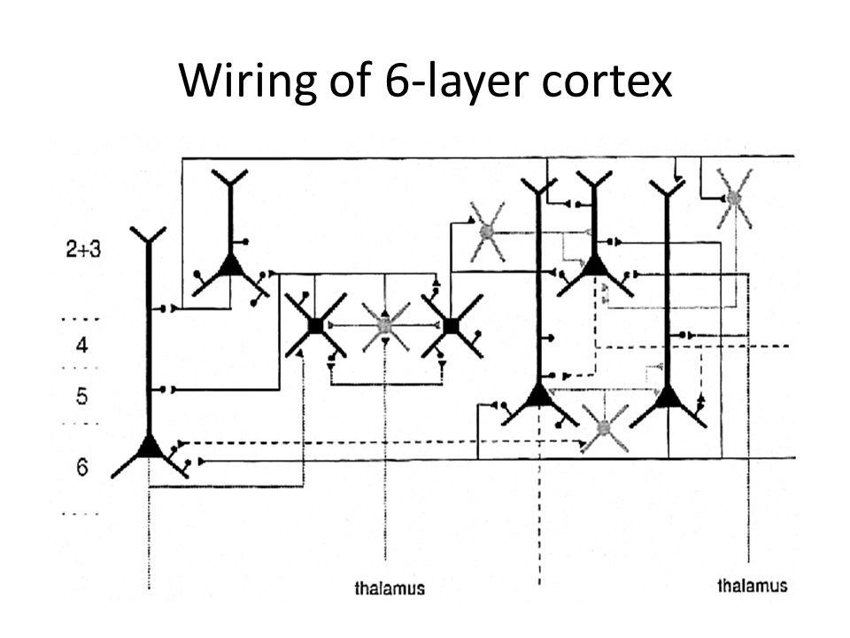 Wiring of 6-layer cortex