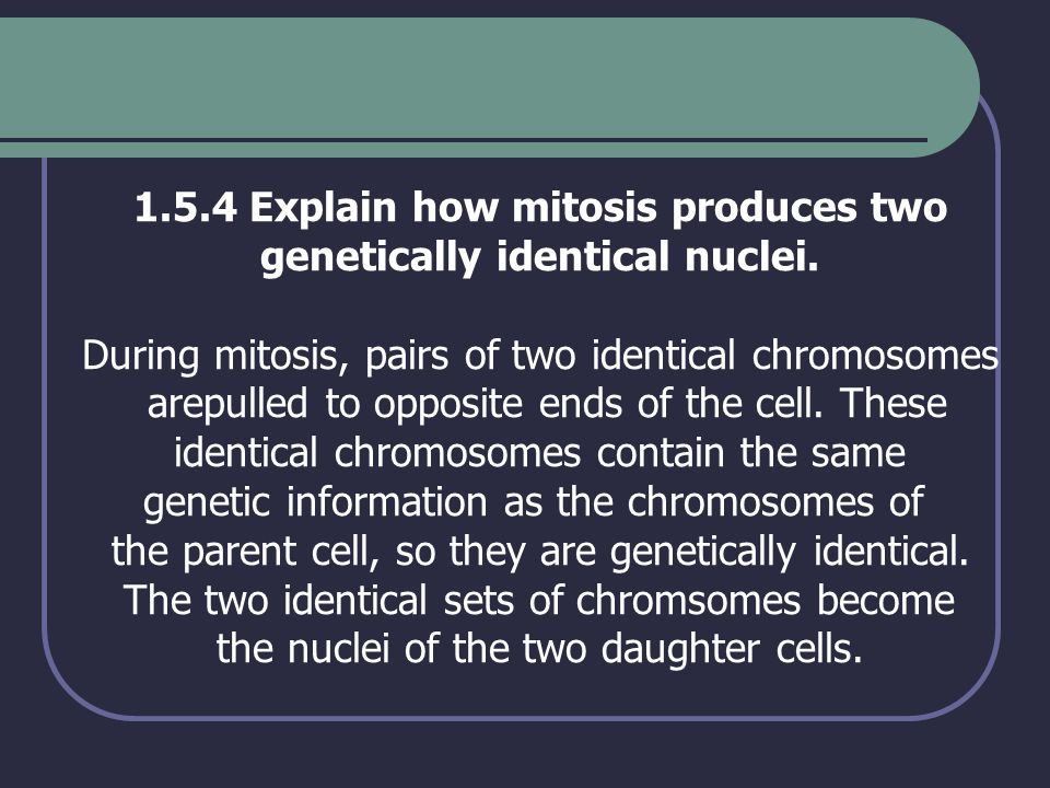 1.5.4 Explain how mitosis produces two genetically identical nuclei. During mitosis, pairs of two identical chromosomes arepulled to opposite ends of