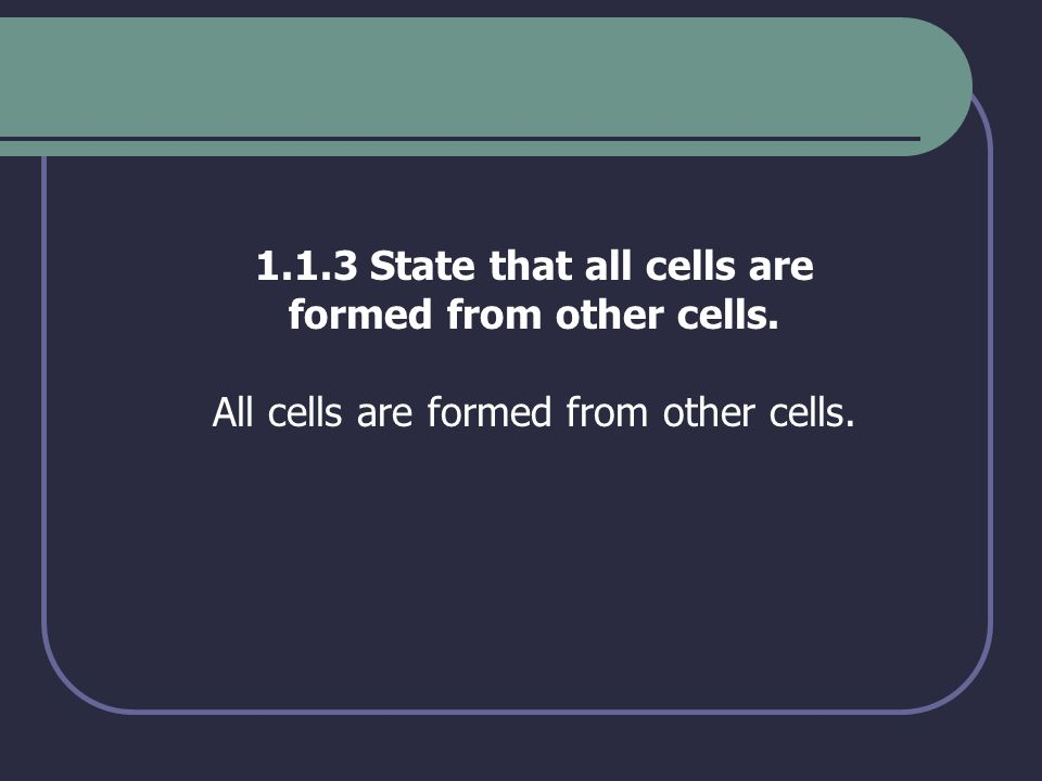 1.3.4 Describe three differences between plant and animal cells.