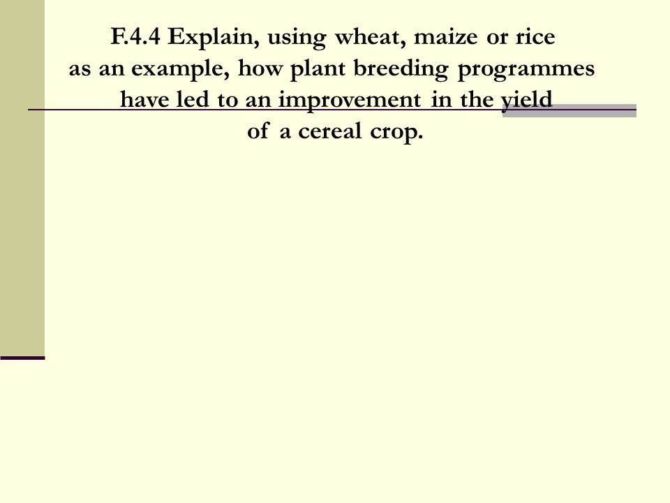 F.4.4 Explain, using wheat, maize or rice as an example, how plant breeding programmes have led to an improvement in the yield of a cereal crop.