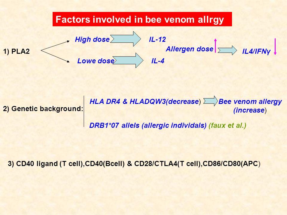 Factors involved in bee venom allrgy 1) PLA2 High doseIL-12 Lowe doseIL-4 Allergen dose IL4/IFNγ HLA DR4 & HLADQW3(decrease)Bee venom allergy (increas
