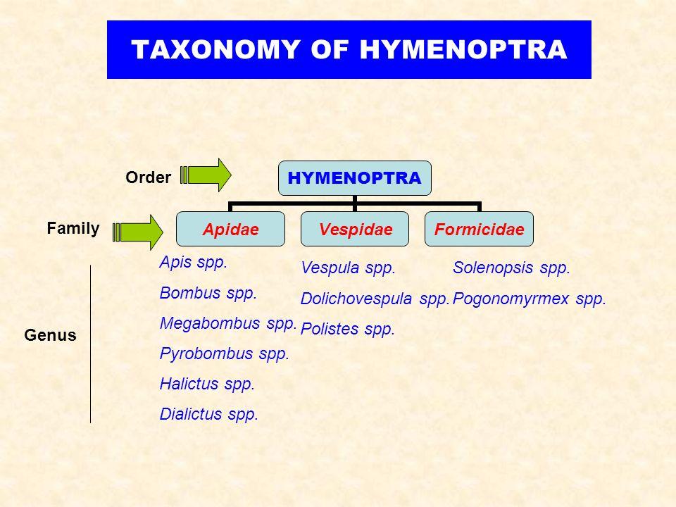 HYMENOPTRA ApidaeVespidaeFormicidae TAXONOMY OF HYMENOPTRA Order Family Apis spp. Bombus spp. Megabombus spp. Pyrobombus spp. Halictus spp. Dialictus