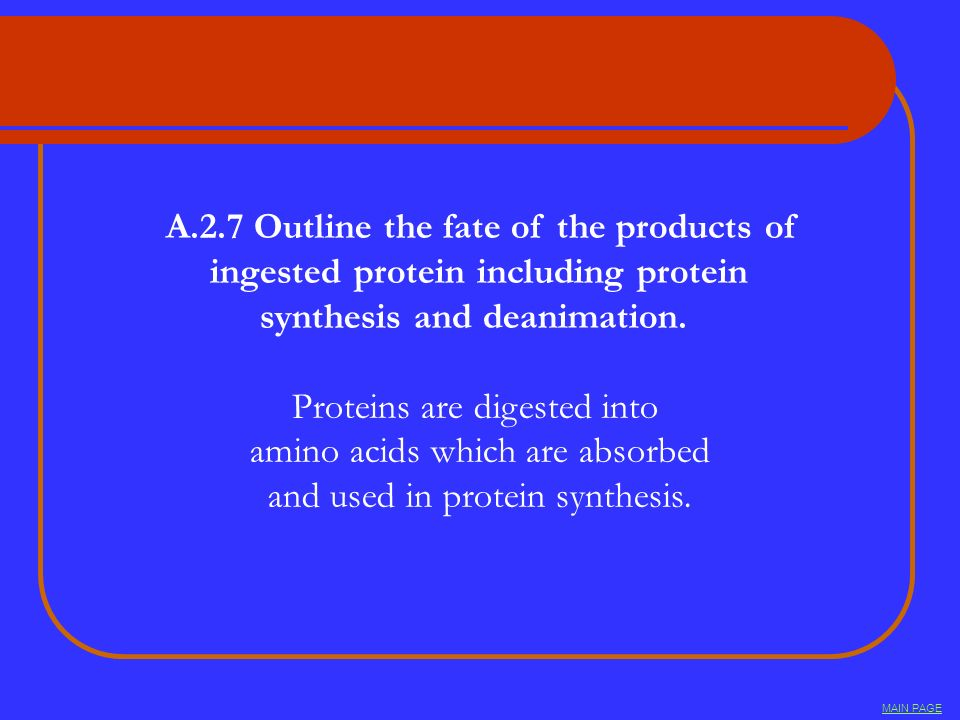 A.2.7 Outline the fate of the products of ingested protein including protein synthesis and deanimation. Proteins are digested into amino acids which a