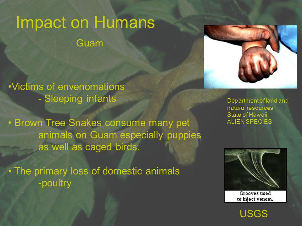 Impact on Humans Guam Victims of envenomations - Sleeping infants Brown Tree Snakes consume many pet animals on Guam especially puppies as well as cag