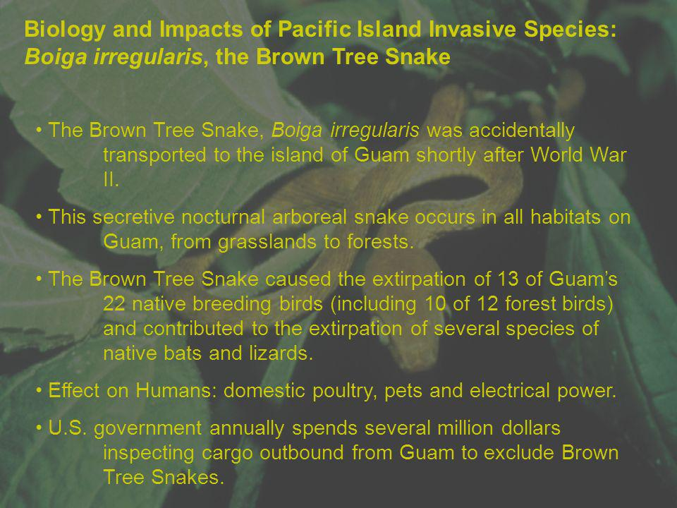 Biology and Impacts of Pacific Island Invasive Species: Boiga irregularis, the Brown Tree Snake The Brown Tree Snake, Boiga irregularis was accidental