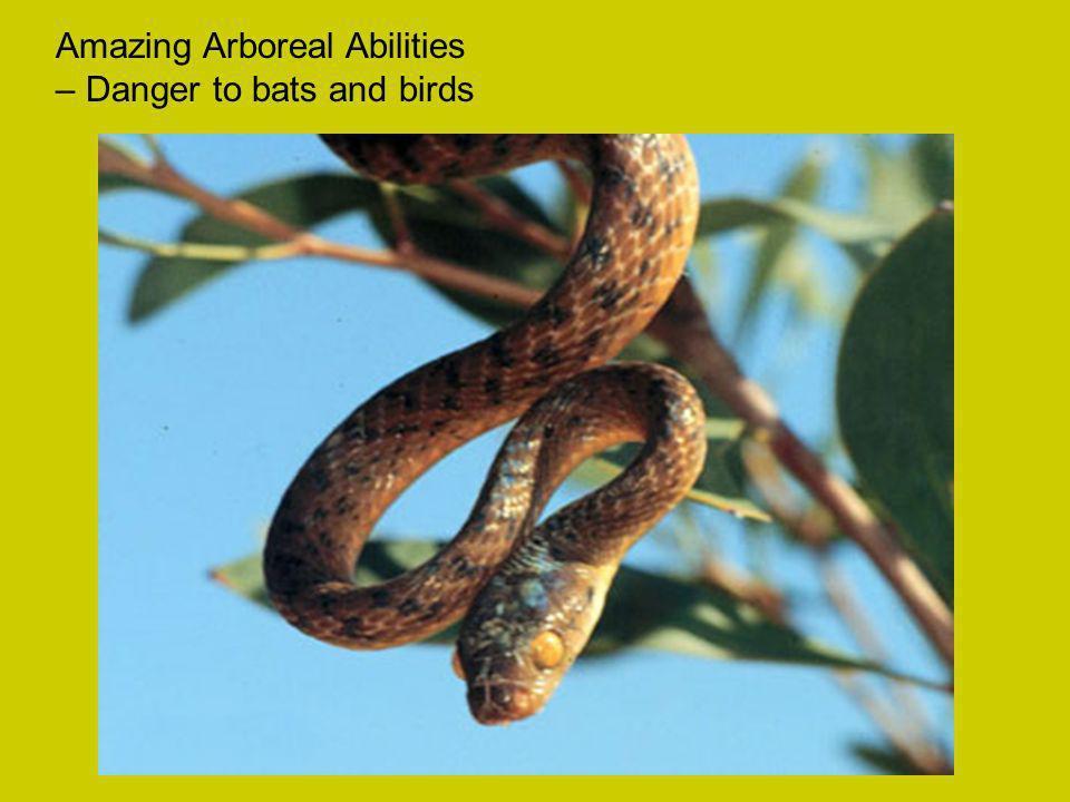 Amazing Arboreal Abilities – Danger to bats and birds