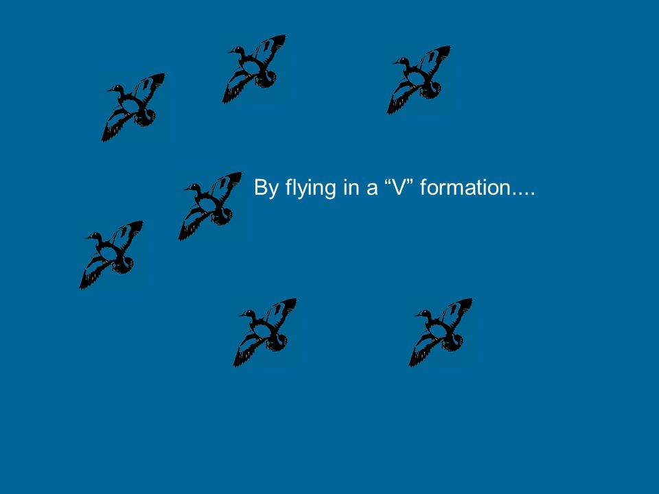 The next season, when you see the geese migrating, going to a warmer place, to sort the winter... Pay attention that they fly in a V formation Maybe y