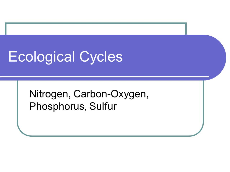 Ecological Cycles Nitrogen, Carbon-Oxygen, Phosphorus, Sulfur
