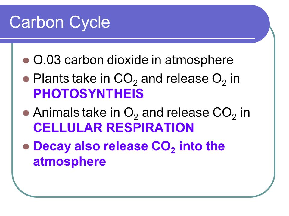 O.03 carbon dioxide in atmosphere Plants take in CO 2 and release O 2 in PHOTOSYNTHEIS Animals take in O 2 and release CO 2 in CELLULAR RESPIRATION De