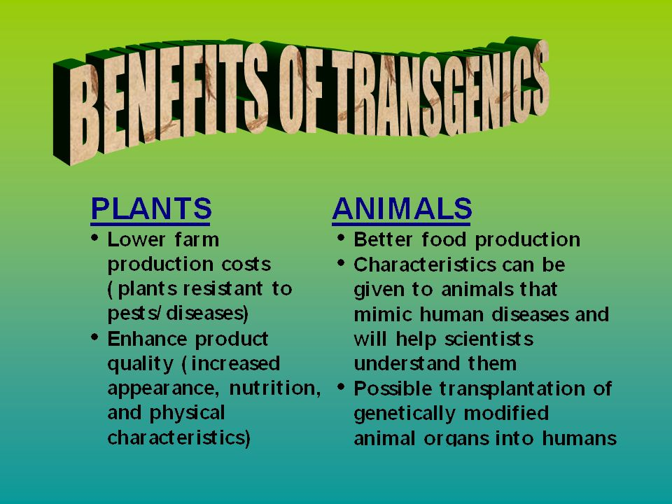 There is much controversy over the topic of transgenics, and the argument is in many ways the same as other topics in biotechnology Religious Leaders - playing God Animal Rights Activists - exploiting the animal unnatural and violates the laws of nature There are also ecological and food-safety issues Here is why different groups of opposition are speaking against transgenics: