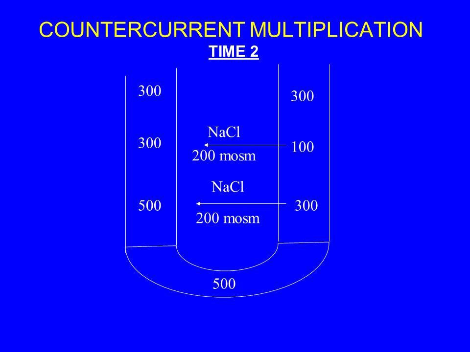 COUNTERCURRENT MULTIPLICATION 300 500 300 500300 100 300 TIME 2 NaCl 200 mosm NaCl 200 mosm