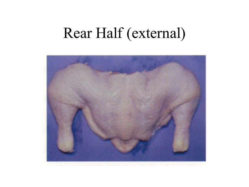 Rear Half (external)