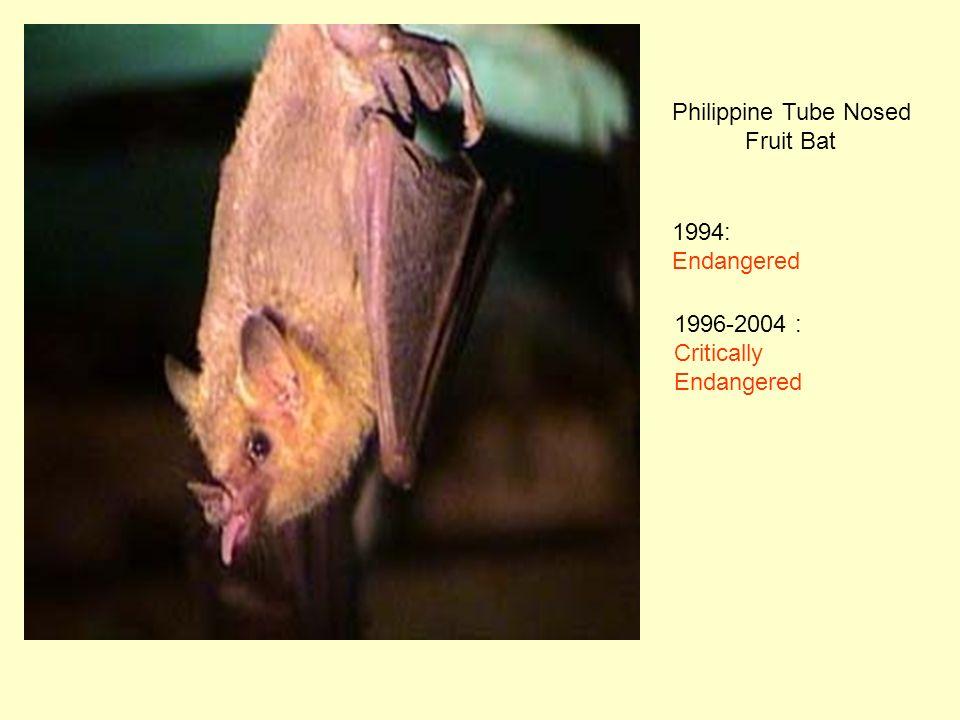 Philippine Tube Nosed Fruit Bat 1994: Endangered 1996-2004 : Critically Endangered