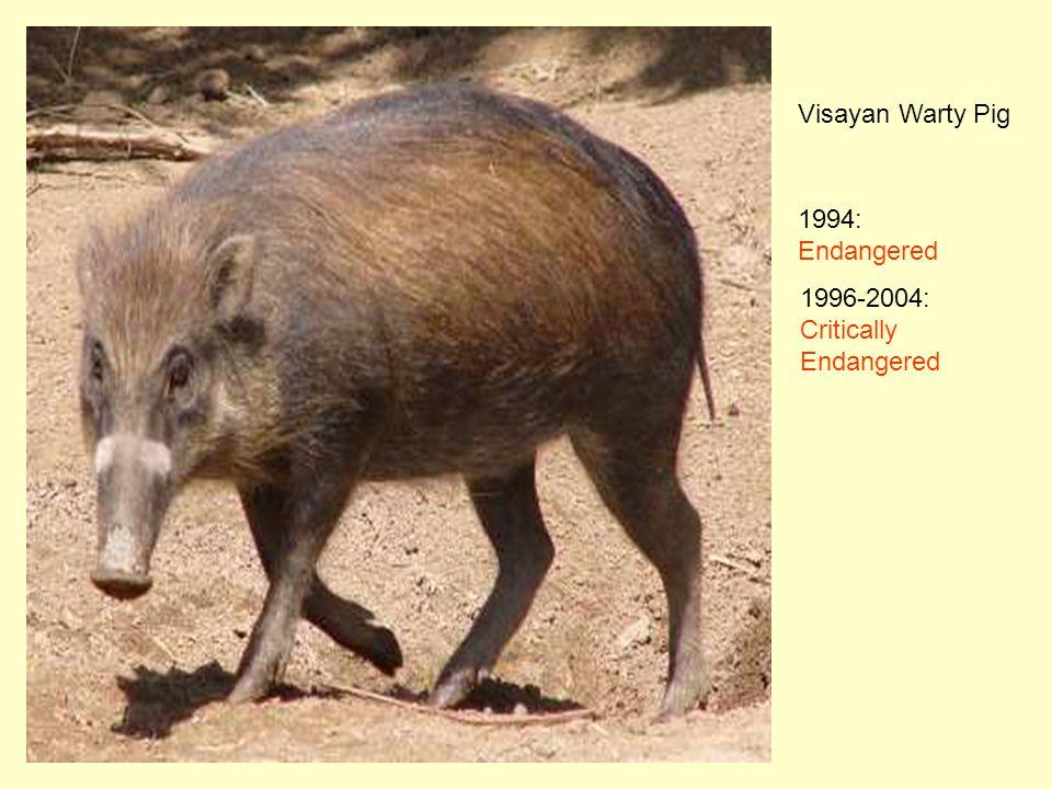 Visayan Warty Pig 1994: Endangered 1996-2004: Critically Endangered