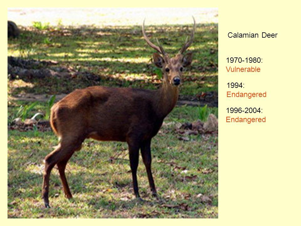 Calamian Deer 1970-1980: Vulnerable 1994: Endangered 1996-2004: Endangered