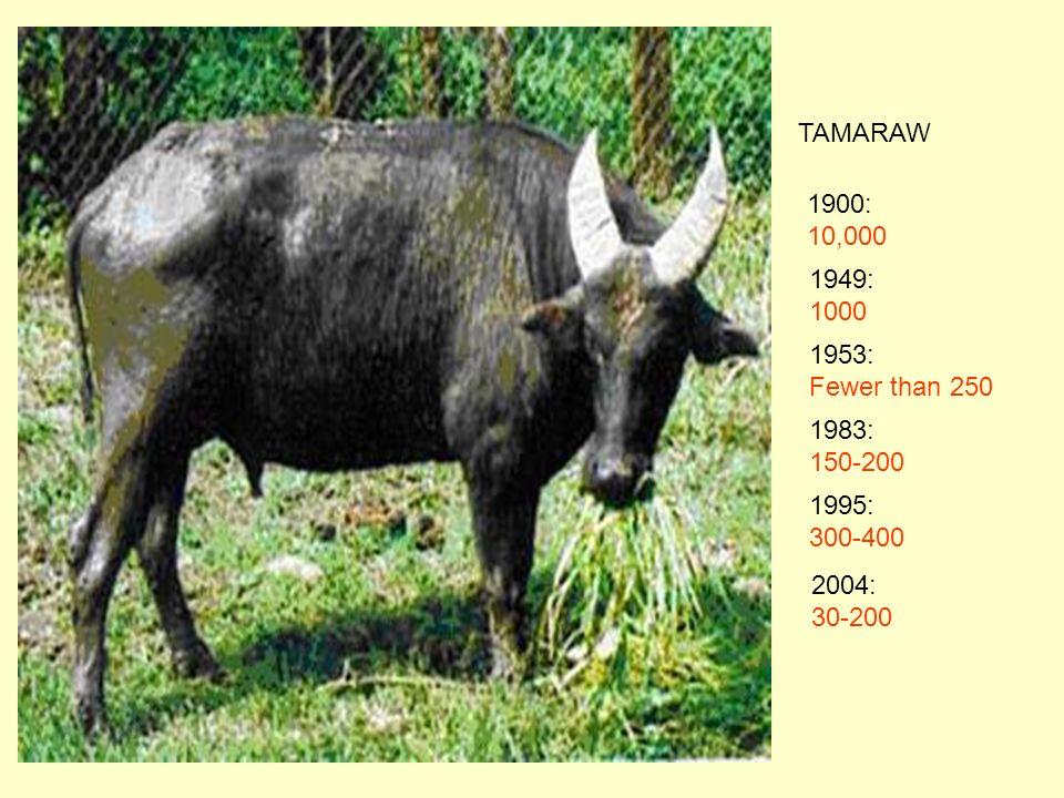 TAMARAW 1900: 10,000 1949: 1000 1953: Fewer than 250 1983: 150-200 1995: 300-400 2004: 30-200