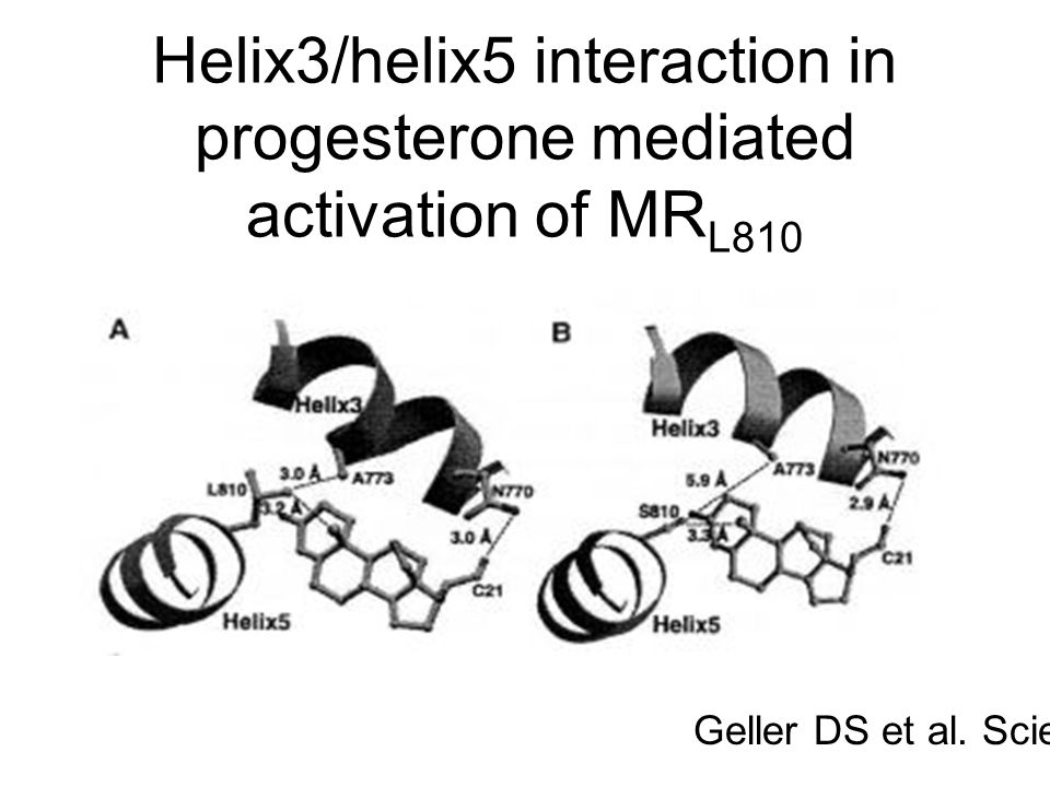 Helix3/helix5 interaction in progesterone mediated activation of MR L810 Geller DS et al. Science,2000