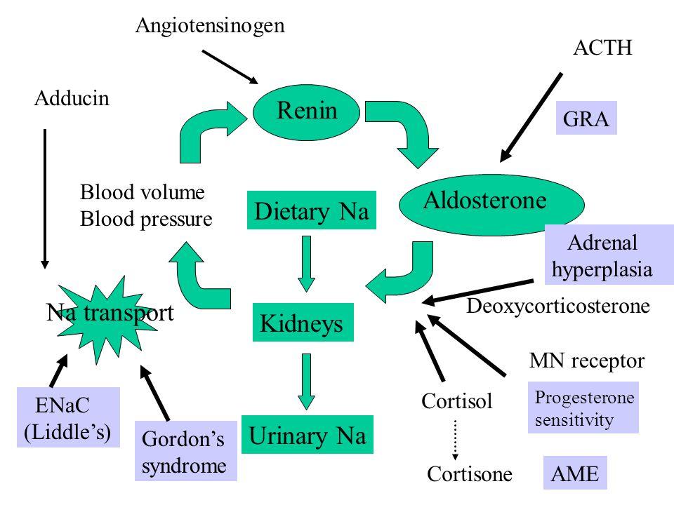 Dietary Na Kidneys Urinary Na Renin Blood volume Blood pressure Na transport Aldosterone ACTH GRA Adrenal hyperplasia Deoxycorticosterone MN receptor