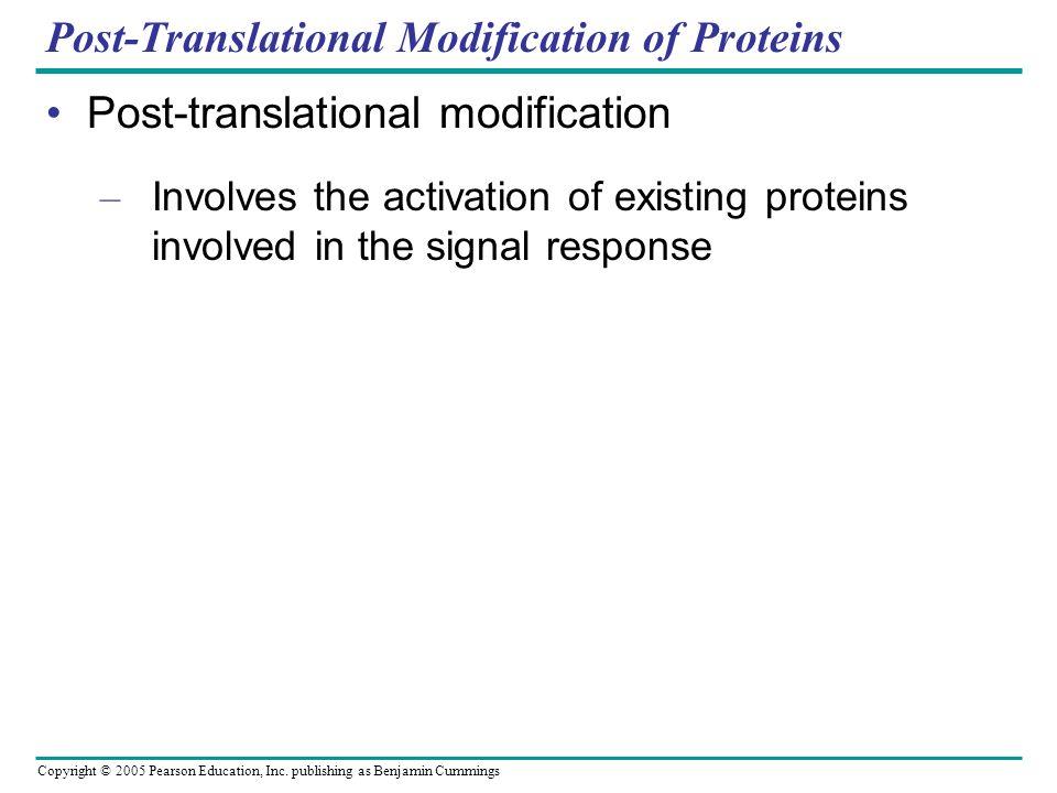Copyright © 2005 Pearson Education, Inc. publishing as Benjamin Cummings Post-Translational Modification of Proteins Post-translational modification –
