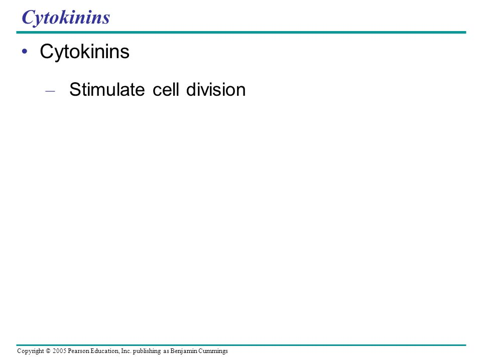 Copyright © 2005 Pearson Education, Inc. publishing as Benjamin Cummings Cytokinins – Stimulate cell division