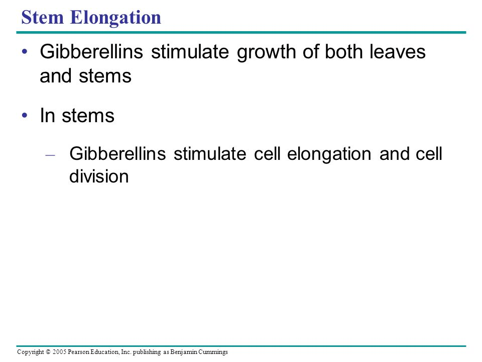 Copyright © 2005 Pearson Education, Inc. publishing as Benjamin Cummings Stem Elongation Gibberellins stimulate growth of both leaves and stems In ste
