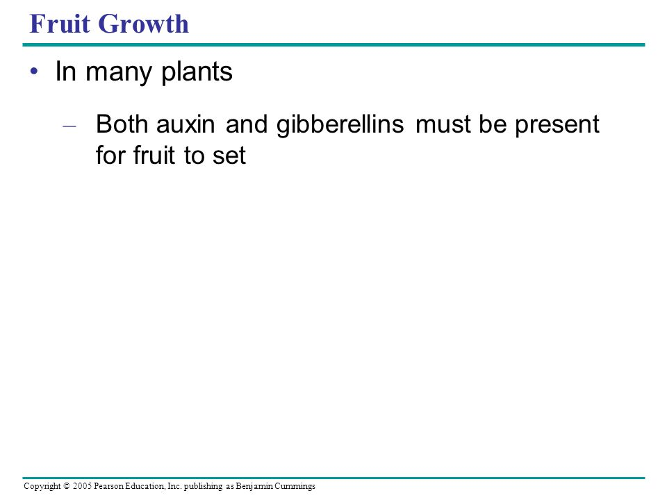 Copyright © 2005 Pearson Education, Inc. publishing as Benjamin Cummings Fruit Growth In many plants – Both auxin and gibberellins must be present for