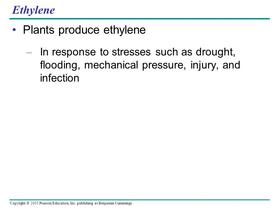 Copyright © 2005 Pearson Education, Inc. publishing as Benjamin Cummings Ethylene Plants produce ethylene – In response to stresses such as drought, f