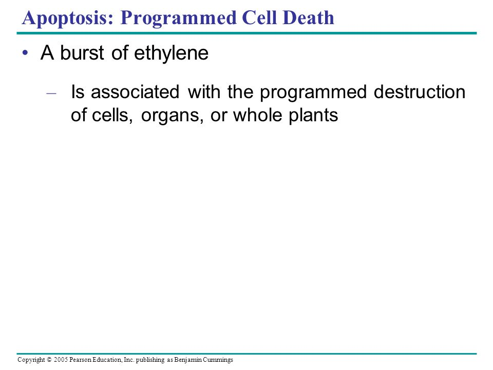 Copyright © 2005 Pearson Education, Inc. publishing as Benjamin Cummings Apoptosis: Programmed Cell Death A burst of ethylene – Is associated with the