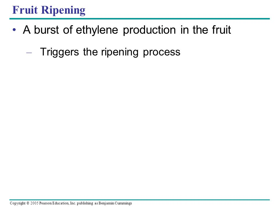 Copyright © 2005 Pearson Education, Inc. publishing as Benjamin Cummings Fruit Ripening A burst of ethylene production in the fruit – Triggers the rip