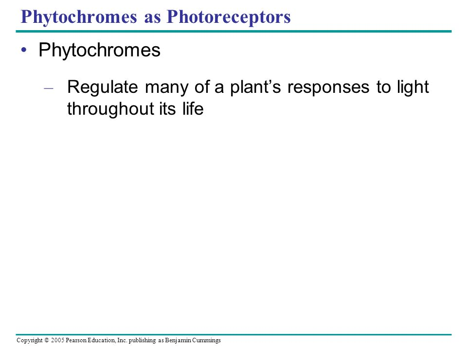 Copyright © 2005 Pearson Education, Inc. publishing as Benjamin Cummings Phytochromes as Photoreceptors Phytochromes – Regulate many of a plants respo