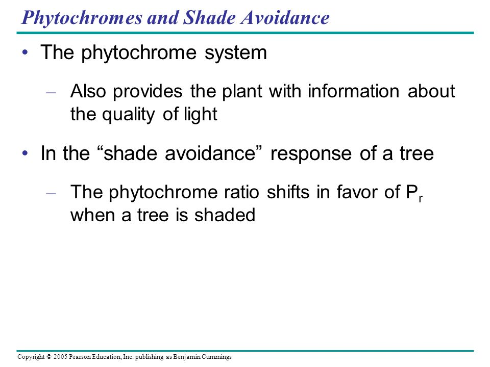 Copyright © 2005 Pearson Education, Inc. publishing as Benjamin Cummings Phytochromes and Shade Avoidance The phytochrome system – Also provides the p