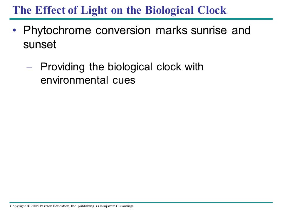 Copyright © 2005 Pearson Education, Inc. publishing as Benjamin Cummings The Effect of Light on the Biological Clock Phytochrome conversion marks sunr