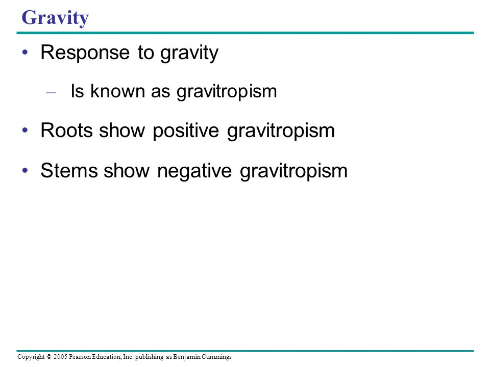 Copyright © 2005 Pearson Education, Inc. publishing as Benjamin Cummings Gravity Response to gravity – Is known as gravitropism Roots show positive gr