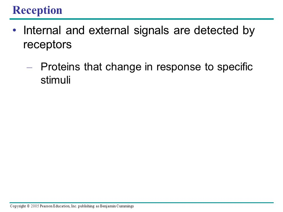 Copyright © 2005 Pearson Education, Inc. publishing as Benjamin Cummings Reception Internal and external signals are detected by receptors – Proteins