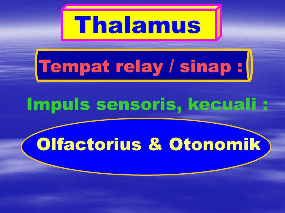 Thalamus Tempat relay / sinap : Impuls sensoris, kecuali : Olfactorius & Otonomik