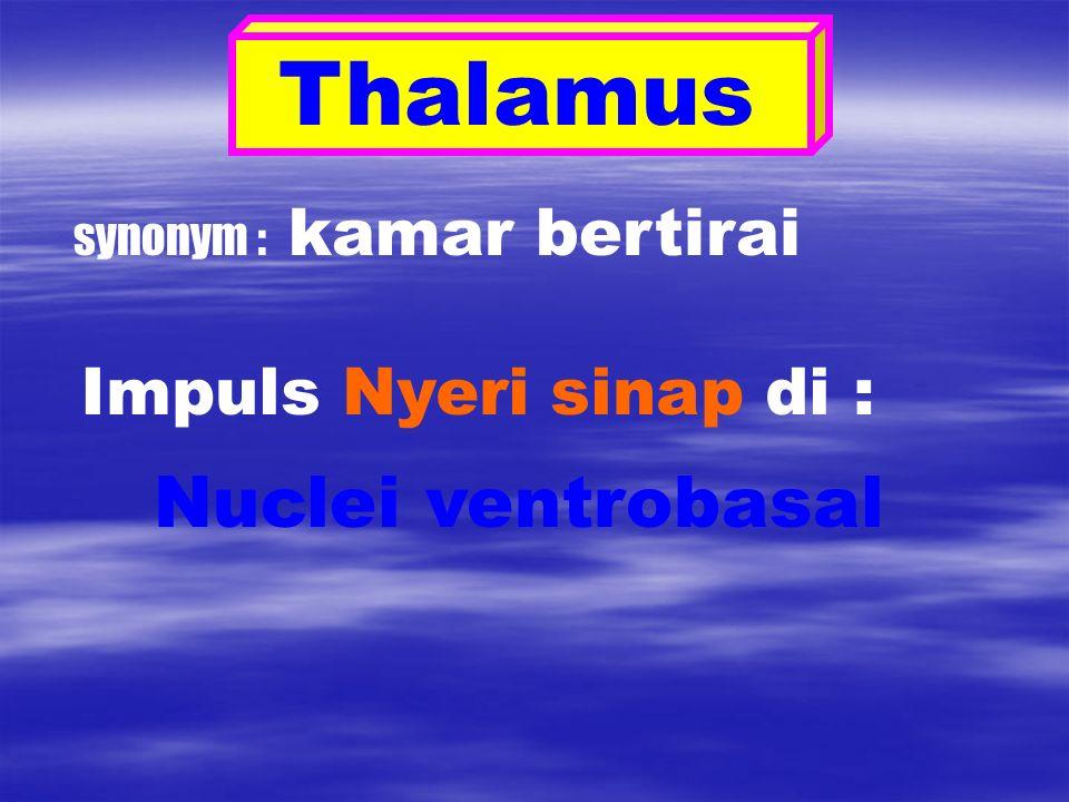 Thalamus synonym : kamar bertirai Impuls Nyeri sinap di : Nuclei ventrobasal