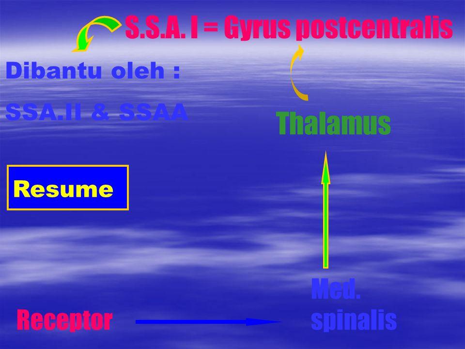 Resume Receptor Med. spinalis Thalamus S.S.A. I = Gyrus postcentralis Dibantu oleh : SSA.II & SSAA