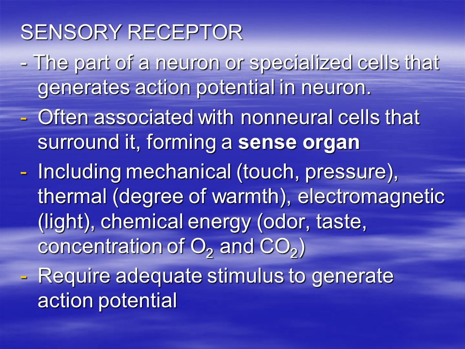 SENSORY RECEPTOR - The part of a neuron or specialized cells that generates action potential in neuron. -Often associated with nonneural cells that su