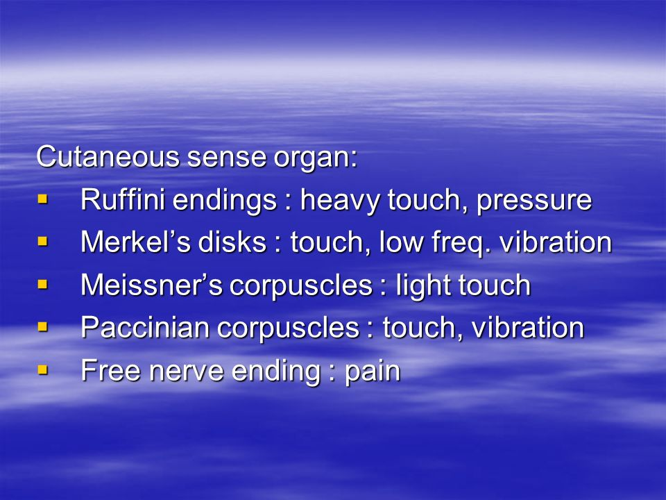 Cutaneous sense organ: Ruffini endings : heavy touch, pressure Ruffini endings : heavy touch, pressure Merkels disks : touch, low freq.
