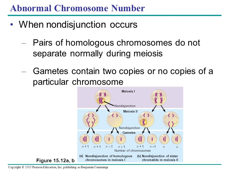 Copyright © 2005 Pearson Education, Inc. publishing as Benjamin Cummings Abnormal Chromosome Number When nondisjunction occurs – Pairs of homologous c