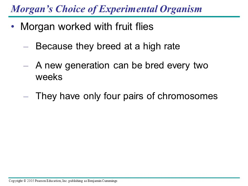 Copyright © 2005 Pearson Education, Inc. publishing as Benjamin Cummings Morgans Choice of Experimental Organism Morgan worked with fruit flies – Beca
