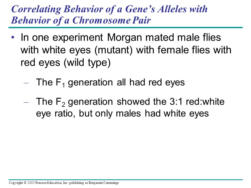 Copyright © 2005 Pearson Education, Inc. publishing as Benjamin Cummings Correlating Behavior of a Genes Alleles with Behavior of a Chromosome Pair In
