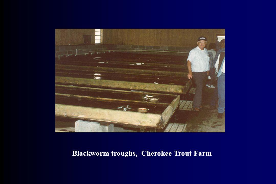 Blackworm troughs, Cherokee Trout Farm